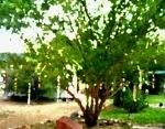 canvas twirlie tree