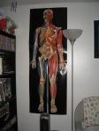 Anatomy 041