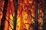 forest fire 4