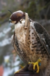 state-fair-falconry-1180523-blog