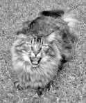 fe-lion