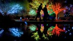 holiday_lights_2011_30