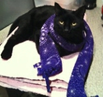 Alfred in a scarf
