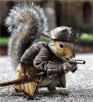 squirrel war