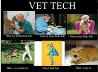 vet tech what i really do