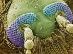 Amazing_Electron_Microscope_Photos_Mosquito_Head-1mdCU