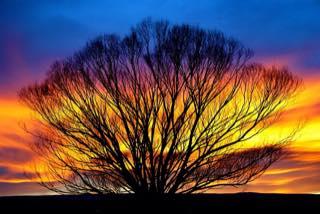 Bronco sunset