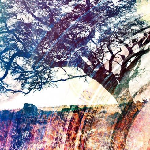 Joel K tree